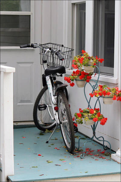 Bicycles And Geraniums Art Print
