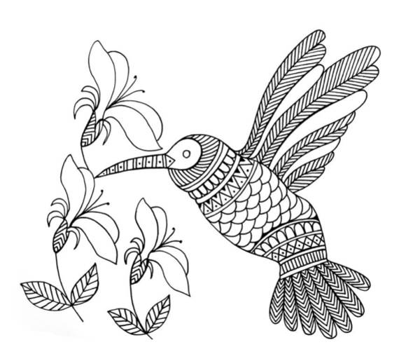 Wall Art - Drawing - Bird Hummingbird by MGL Meiklejohn Graphics Licensing