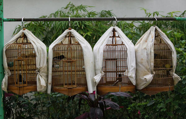 Wall Art - Photograph - Birds In Cages For Sale At A Bird by Animal Images