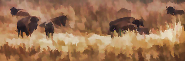 Wall Art - Painting - Bison  Bison Bison Athabascae  Grazing by Ron Harris