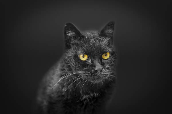 Photograph - Black Cat by Peter Lakomy