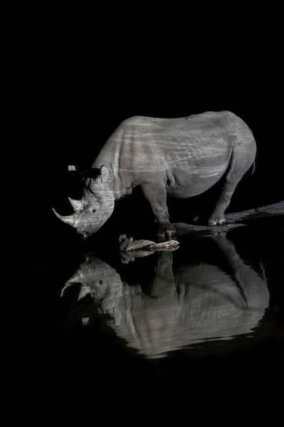 Hoof Photograph - Black Rhinoceros At Night by Tony Camacho/science Photo Library