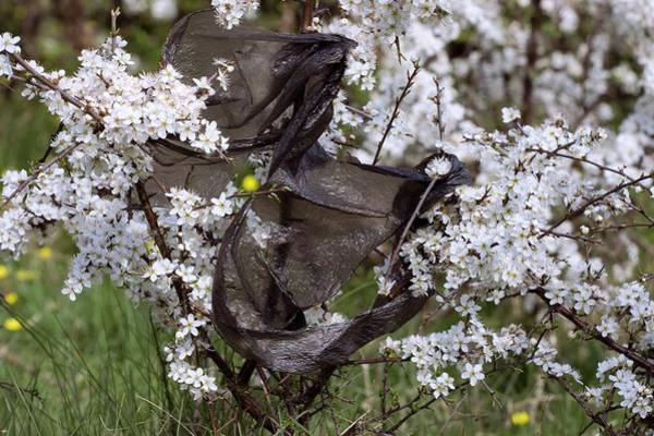 Wall Art - Photograph - Blackthorn And Plastic Bag by David Woodfall Images/science Photo Library