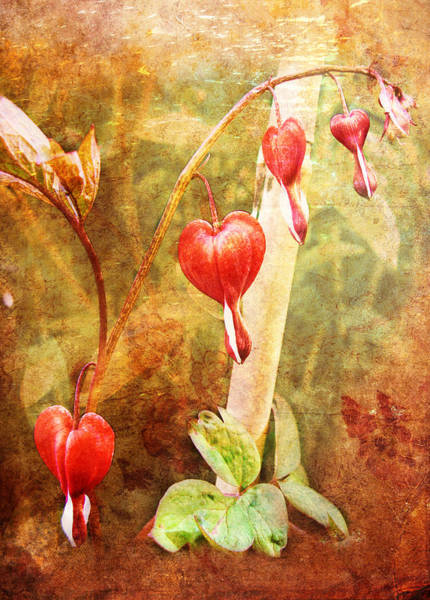 Digital Art - Bleeding Heart by Helene U Taylor