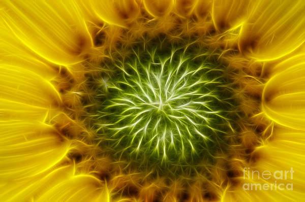 Wall Art - Digital Art - Bloom Of The Sunflower by Michal Boubin