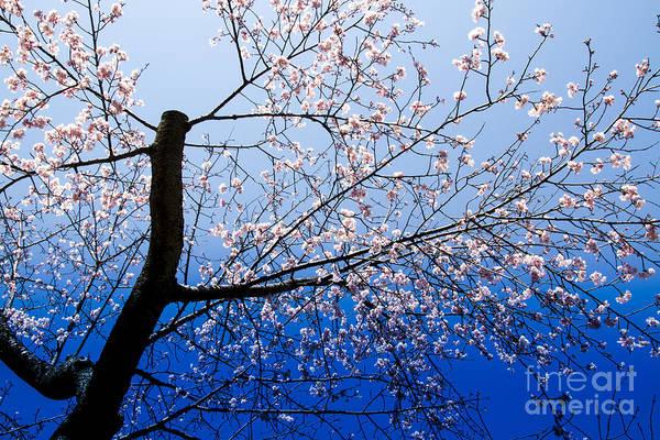 Photograph - Bloom by Tad Kanazaki
