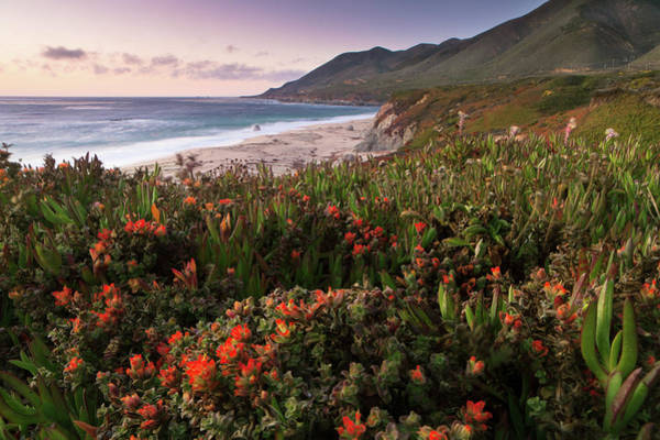 Monterey Park Photograph - Blooming Flowers, Garrapata State Park by Ingmar Wesemann