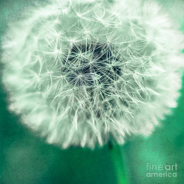 Photograph - Blowball 1x1 by Hannes Cmarits