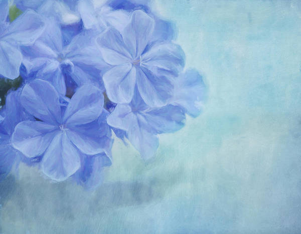 Photograph - Blue Fantasy by Kim Hojnacki