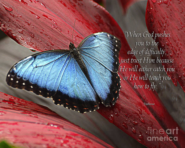 Blue Berry Photograph - Blue Morpho 2 by Diane E Berry