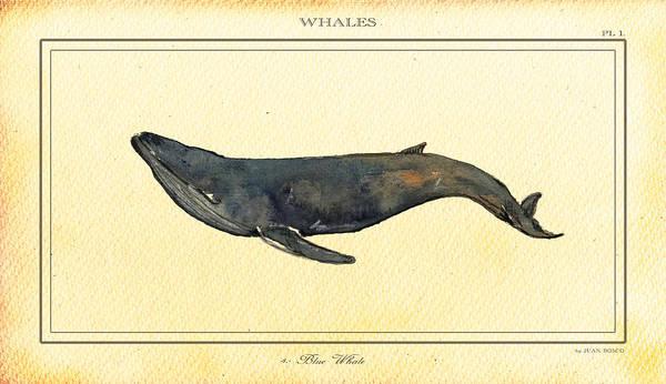 Wall Art - Digital Art - Blue Whale by Juan  Bosco