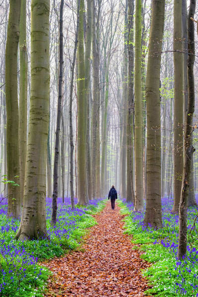 Wall Art - Photograph - Bluebell Flowers In Hardwood Beech by Jason Langley