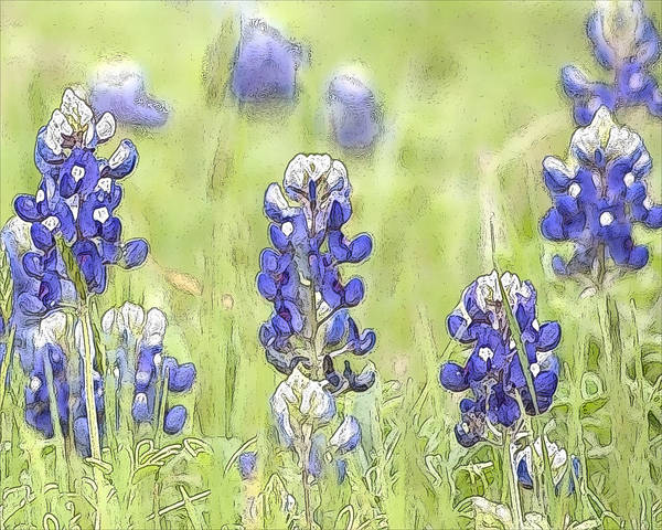 Texas Bluebonnet Digital Art - Bluebonnets by Jeanne A Martin