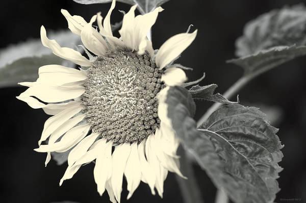 Photograph - Blumen by Miguel Winterpacht