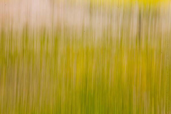 Photograph - Blur by Alexander Fedin