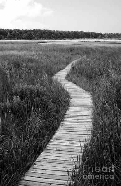 Photograph - Bodie Island Boardwalk by William Kuta
