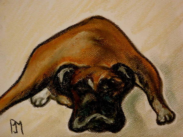 Wall Art - Drawing - Boxer Down by Pete Maier