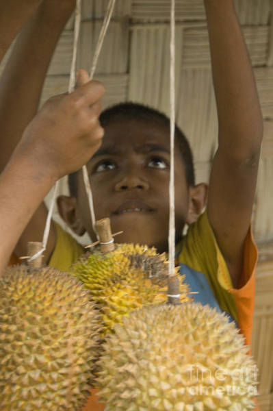 Photograph - Boy Selling Durians In Timor-leste by Dan Suzio