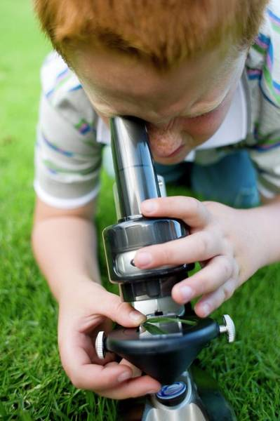Microscope Wall Art - Photograph - Boy Using A Light Microscope by Ian Hooton/science Photo Library