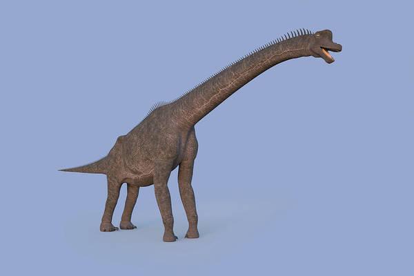 Wall Art - Photograph - Brachiosaurus Dinosaur by Roger Harris/science Photo Library