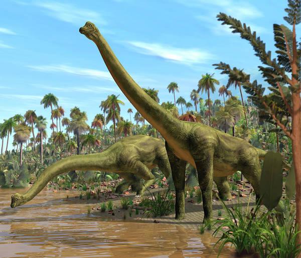 Palaeozoology Wall Art - Photograph - Brachiosaurus Dinosaurs by Roger Harris