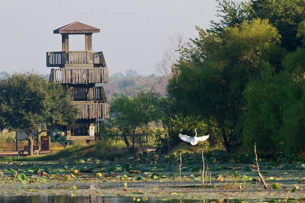 Brazos Bend State Park Wall Art - Photograph - Brazos Bend State Park And Wetlands by Larry Ditto