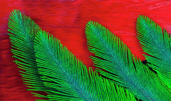 Quetzals Photograph - Breast And Wing Feather Design by Darrell Gulin