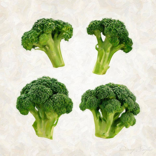 Wall Art - Painting - Broccoli Isolated On White by Danny Smythe