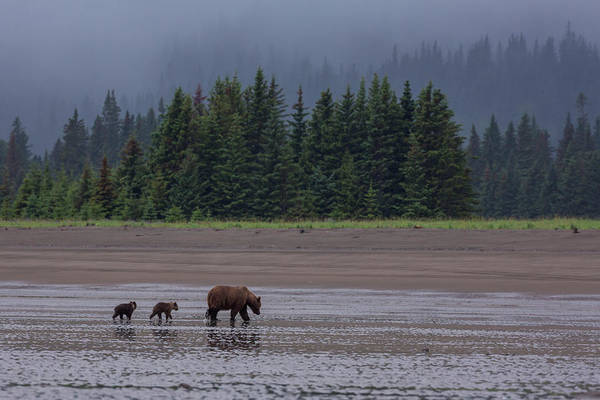 Born In The Usa Photograph - Brown Bear In Lake Clark National Park by Gavriel Jecan