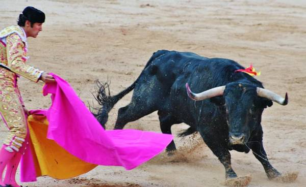 Toreador Photograph - Bull Fight  by Christopher Hoffman