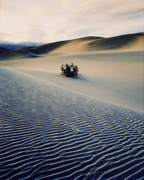 Bushes In Sand Dunes At Dusk Art Print by Gary Yeowell
