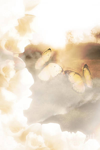 Warmth Digital Art - Butterfly Dreams by Jorgo Photography - Wall Art Gallery