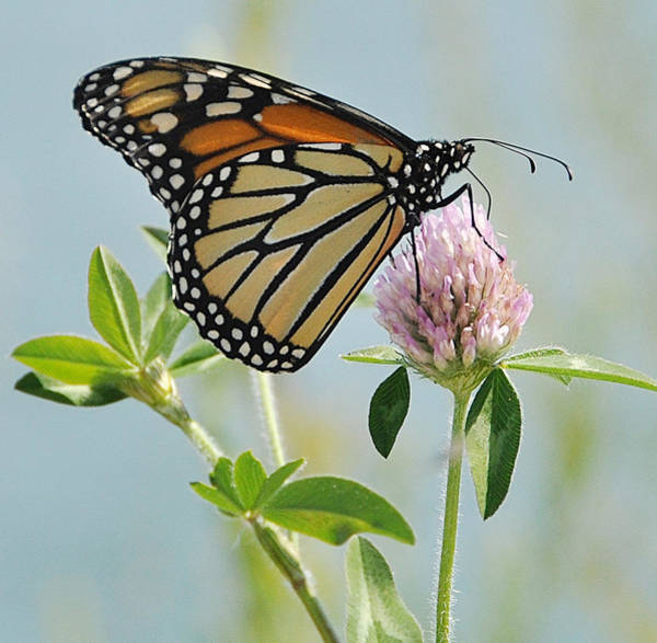 Photograph - Butterfly by Joanne Brown