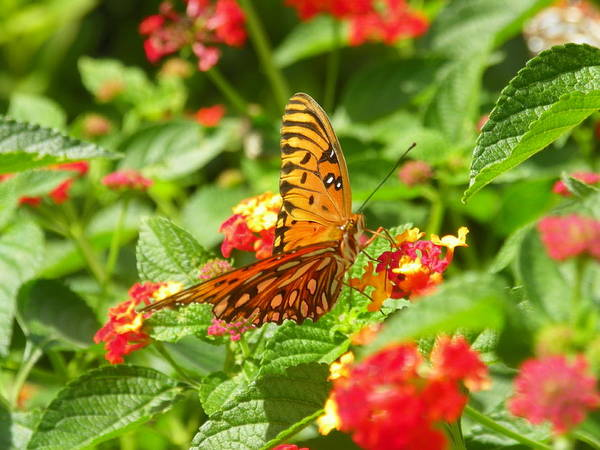 Photograph - Butterfly 3 by Lisa Wooten