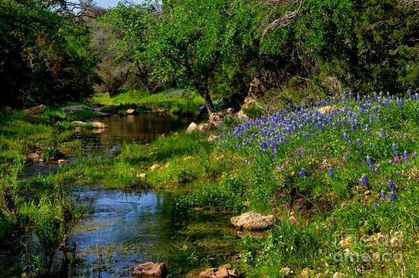 Texas Bluebonnet Photograph - By The Stream by Cathy Alba