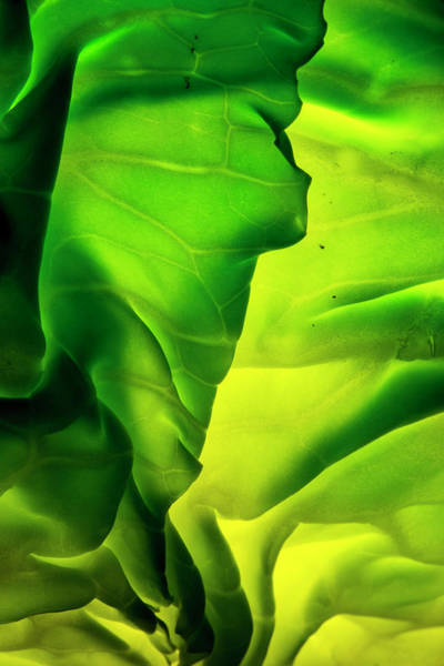 Wall Art - Photograph - Cabbage Detail Showing Veins by Brent Bergherm