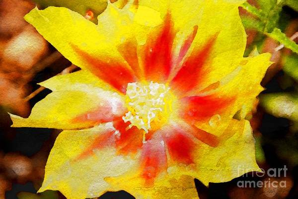 Photograph - Cactus Flower Wc by Ken Williams