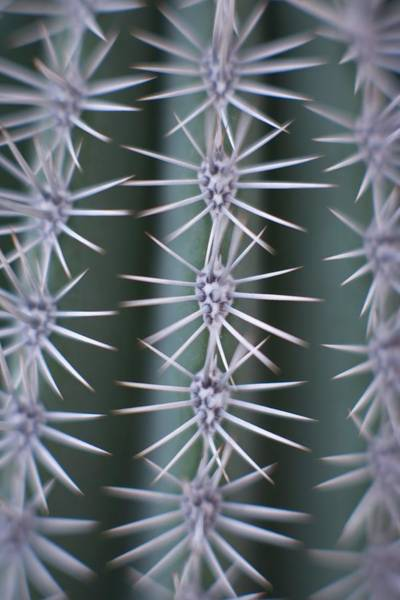 Horticulture Photograph - Cactus Spines by Ian Hooton/science Photo Library