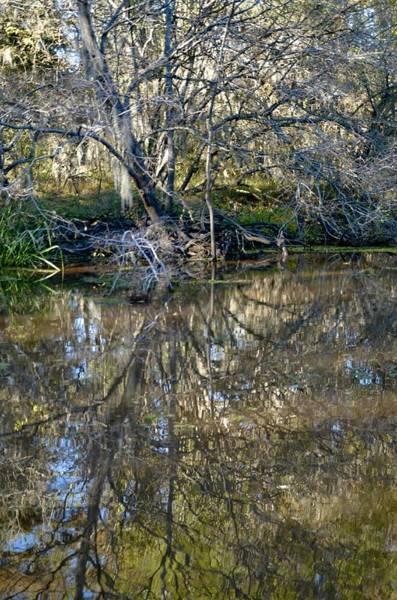 Photograph - Caddo Lake 11 by Ricardo J Ruiz de Porras