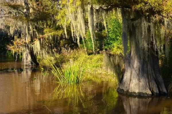 Photograph - Caddo Lake 15 by Ricardo J Ruiz de Porras