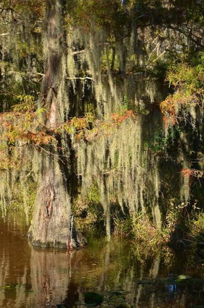 Photograph - Caddo Lake 16 by Ricardo J Ruiz de Porras