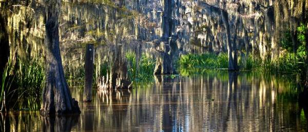 Photograph - Caddo Lake 17 by Ricardo J Ruiz de Porras