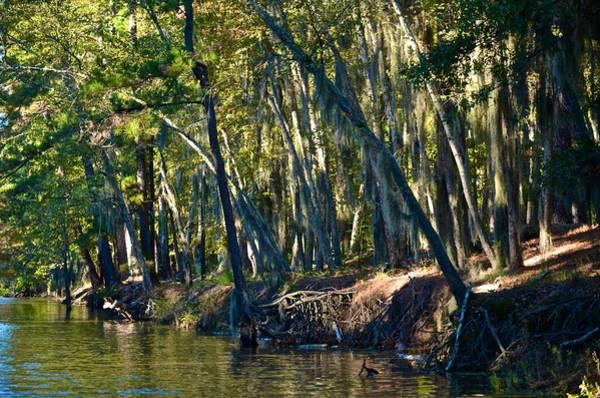 Photograph - Caddo Lake 7 by Ricardo J Ruiz de Porras
