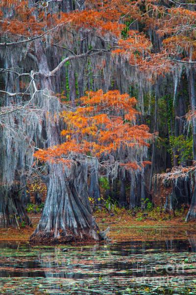 Photograph - Caddo Lake Autumn by Inge Johnsson