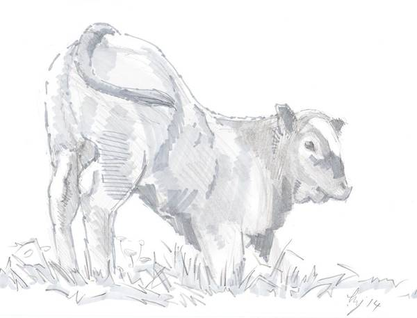 Drawing - Calf Drawing by Mike Jory