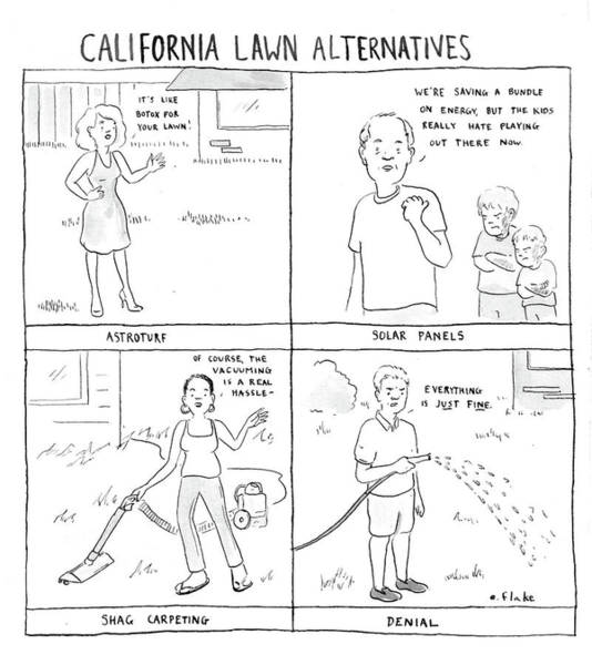 Dry Drawing - California Lawn Alternatives by Emily Flake