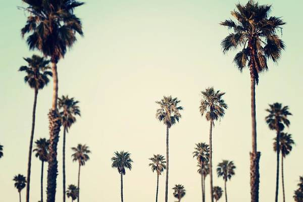Tropical Tree Photograph - California Love  by Bree Madden