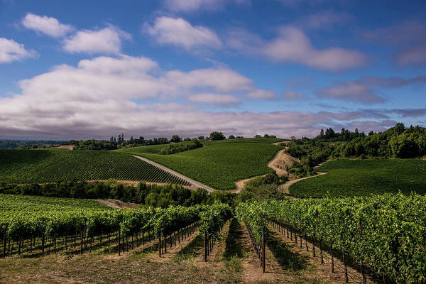 Photograph - California Wine Producers Expecting by George Rose