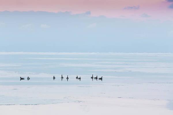 Canadian Geese Sit On Lake Ontario Art Print by Ed Norton