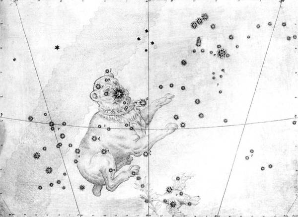 First Star Photograph - Canis Major Constellation by Royal Astronomical Society/science Photo Library